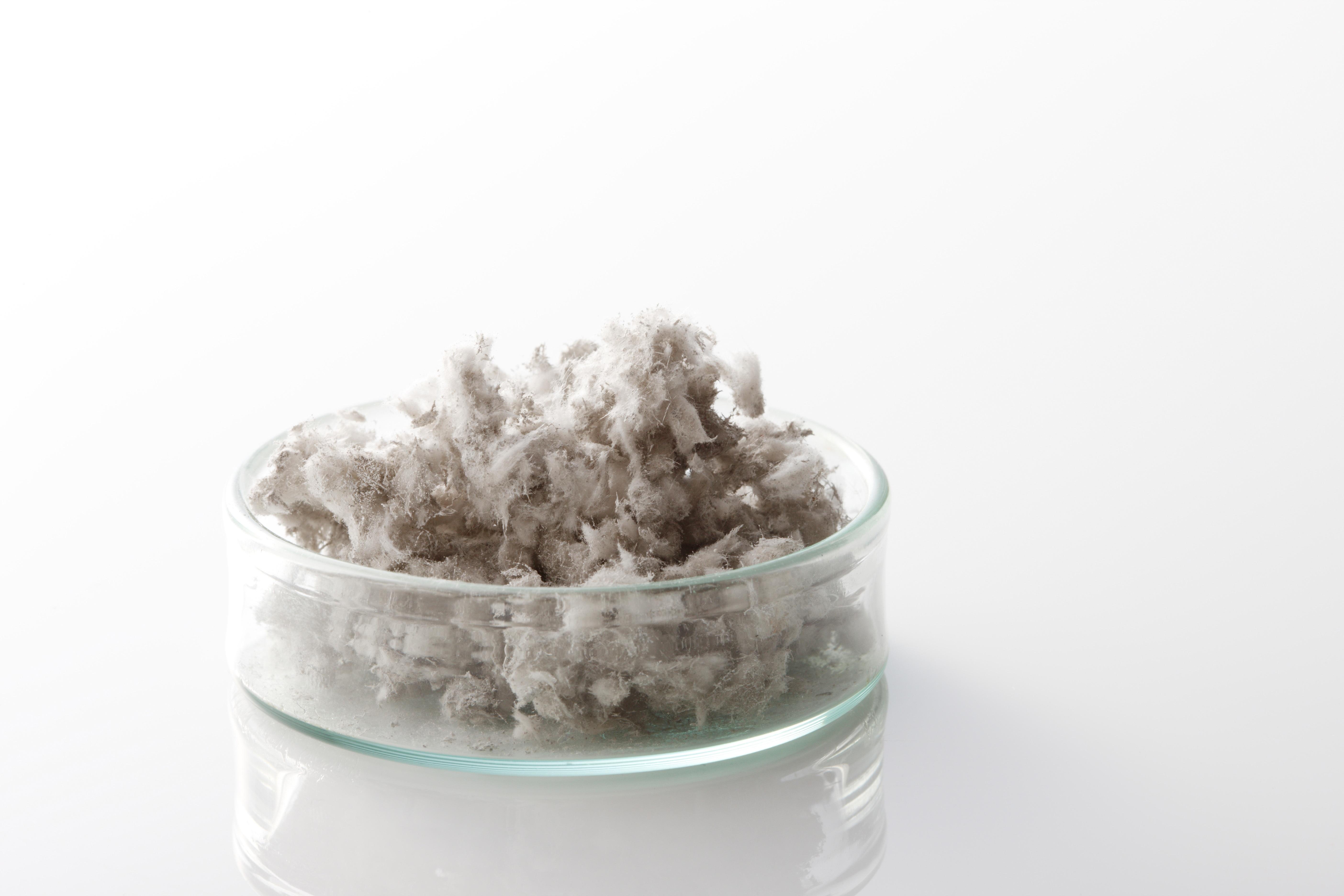 asbestos in petrie dish